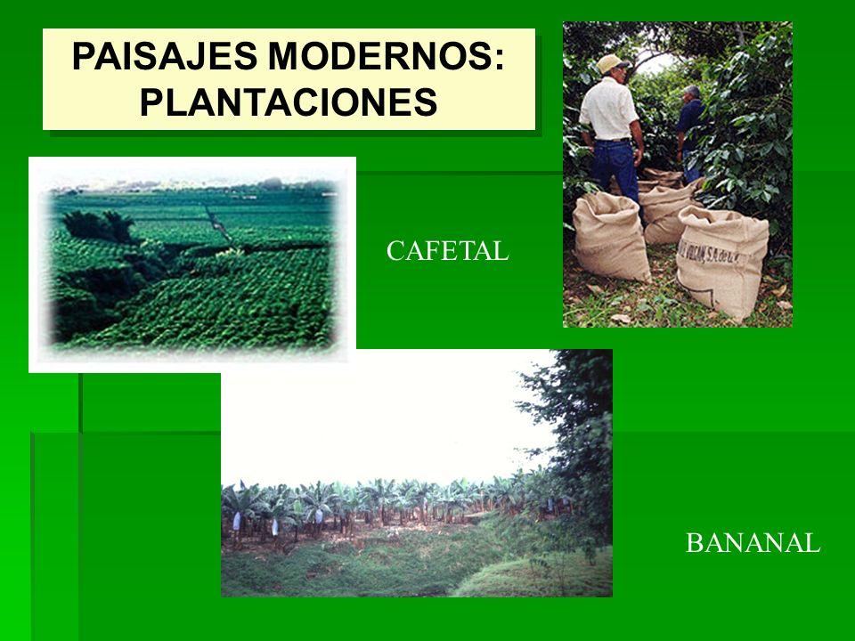 PAISAJES MODERNOS: PLANTACIONES CAFETAL BANANAL