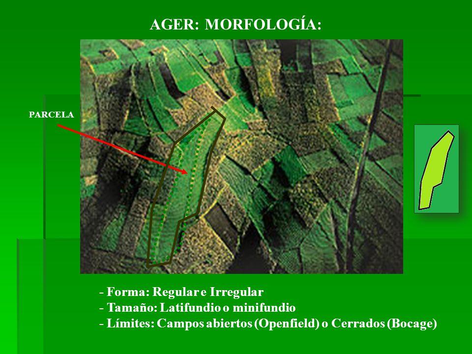 PARCELA - Forma: Regular e Irregular - Tamaño: Latifundio o minifundio - Límites: Campos abiertos (Openfield) o Cerrados (Bocage) AGER:MORFOLOGÍA: