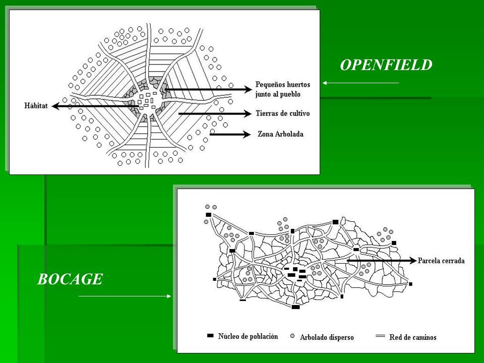 OPENFIELD BOCAGE