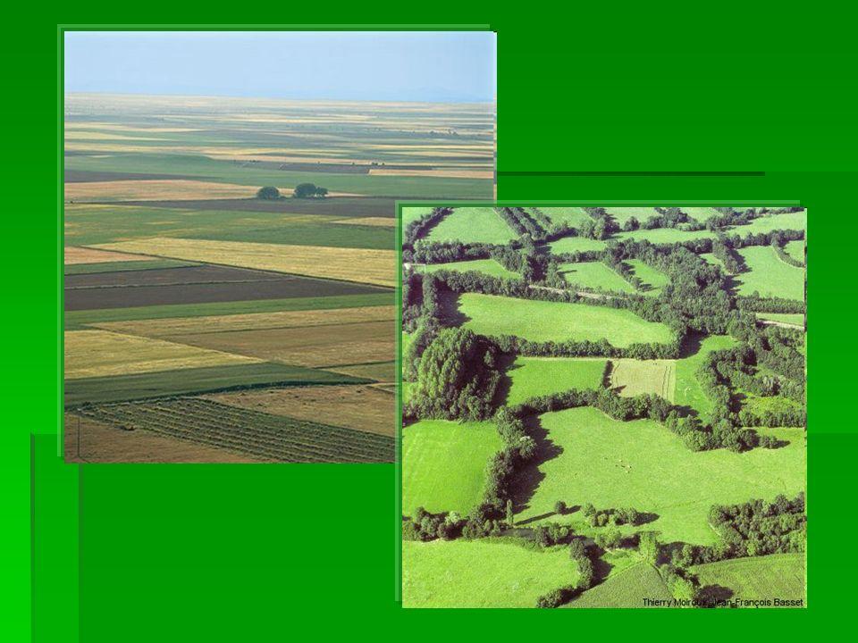 AGER: TIPOS DE PRODUCCIÓN HERBÁCEO (arroz) ARBUSTIVO (vid) ARBÓREO (Naranjos)