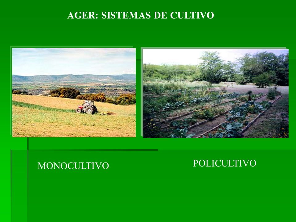 AGER: SISTEMAS DE CULTIVO MONOCULTIVO POLICULTIVO