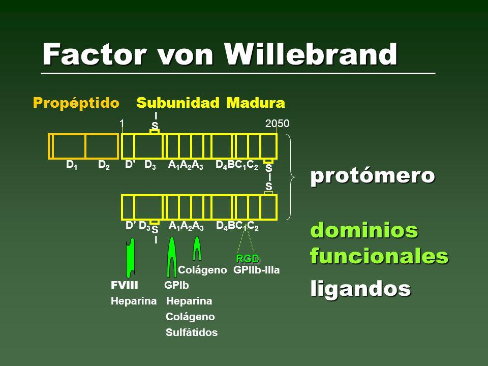 Sadler JE, 2005 vWF Ensamble y Catabolismo Proteolisis aumentada (vWD2A) Depuración aumentada (vWD1 Vicenza) Plasma Inicial k proteolisis k depuración ADAMTS-13 k secreción