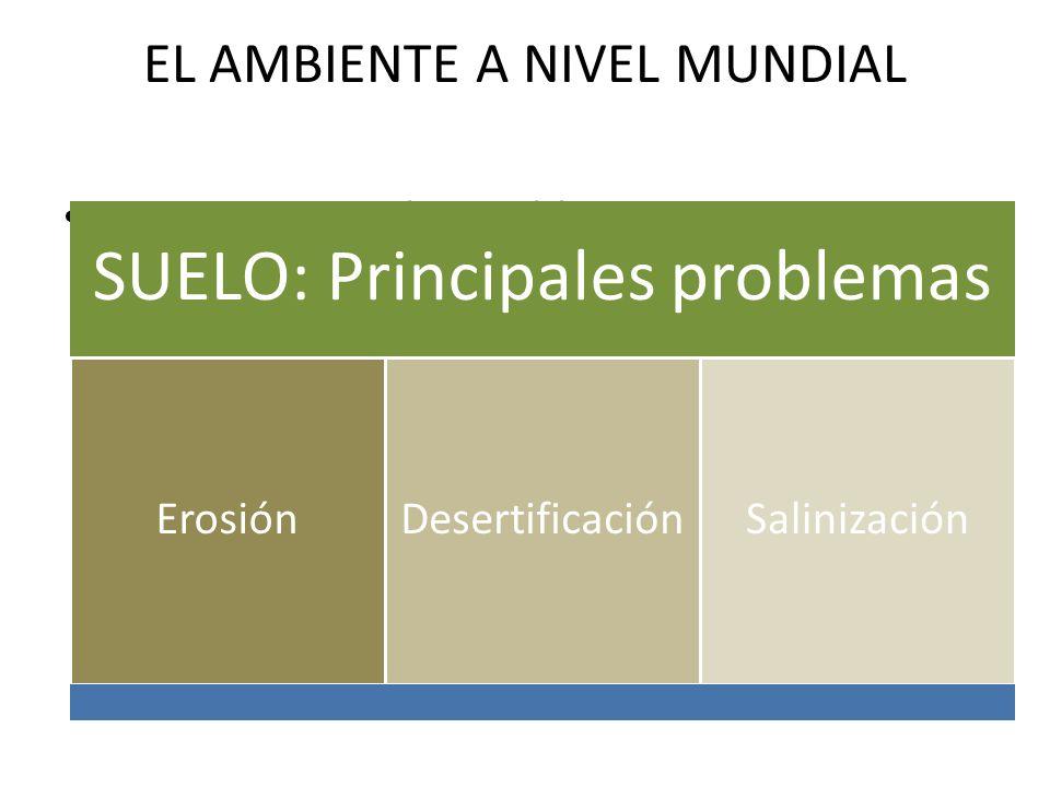 EL AMBIENTE A NIVEL MUNDIAL SUELO: Principales problemas ErosiónDesertificaciónSalinización