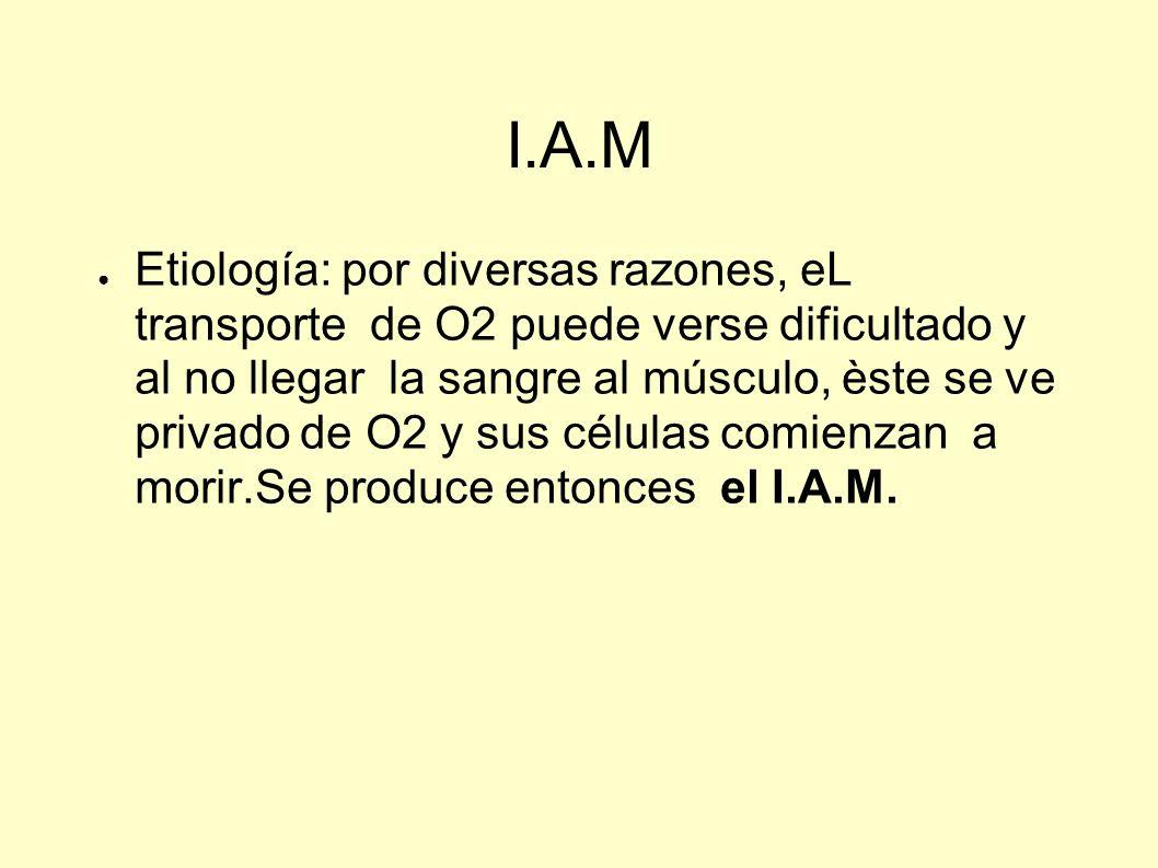 I.A.M Etiología: por diversas razones, eL transporte de O2 puede verse dificultado y al no llegar la sangre al músculo, èste se ve privado de O2 y sus