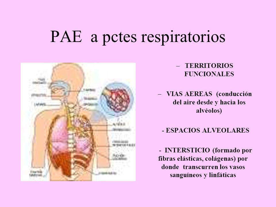 PAE a pctes respiratorios –TERRITORIOS FUNCIONALES –VIAS AEREAS (conducción del aire desde y hacia los alvéolos) - ESPACIOS ALVEOLARES - INTERSTICIO (