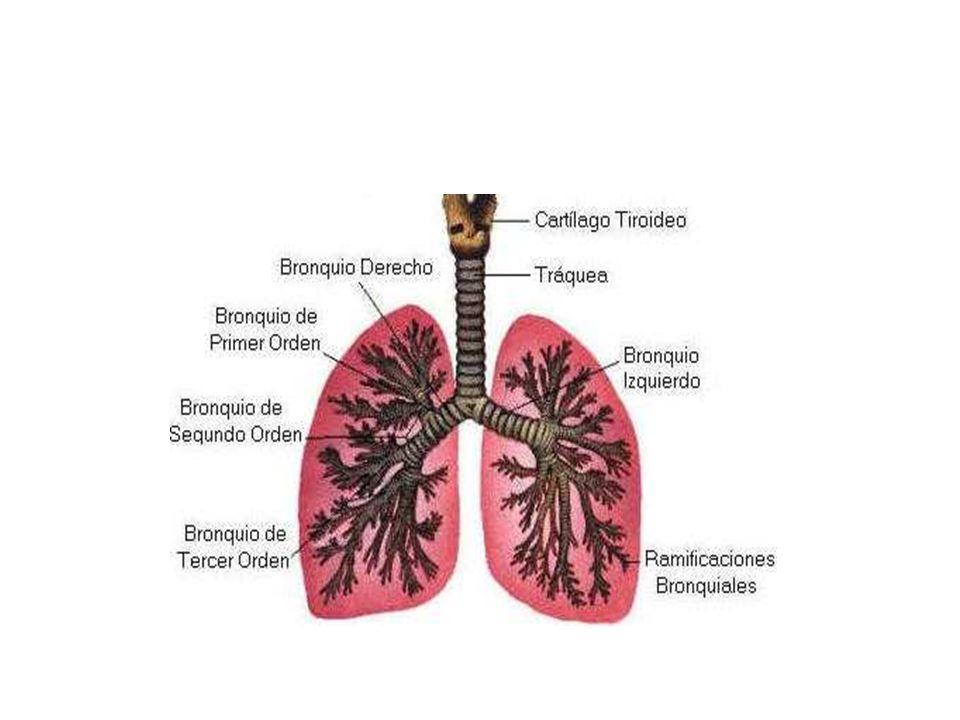 HIPOXIA CIRCULATORIA Produce Cianosis periférica puede ser por isquemia o por estasis venosa CONCLUSIÓN La Cianosis es la consecuencia de hipoxia severa de cualquiera de uno o los 2 tipos