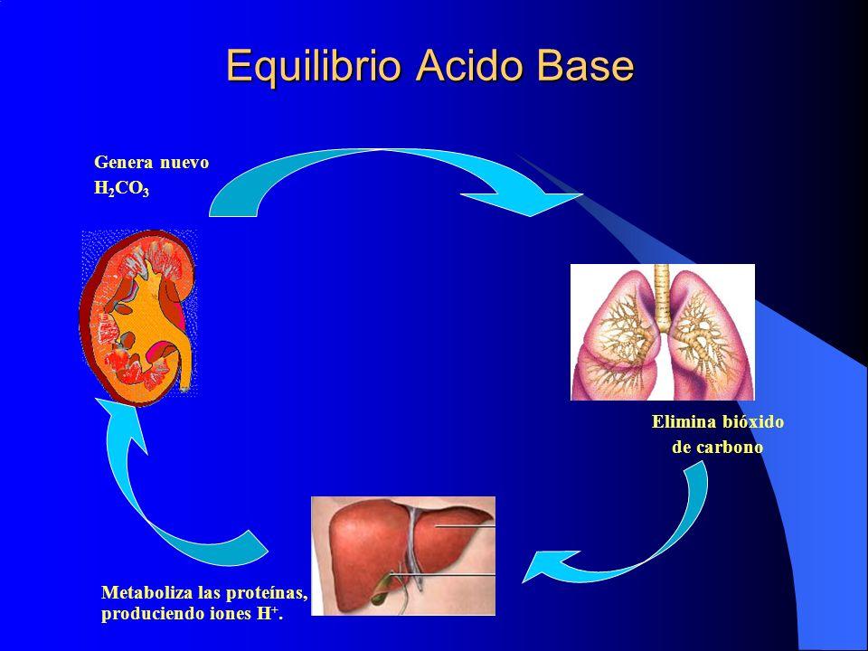 Equilibrio Acido Base Genera nuevo H 2 CO 3 Elimina bióxido de carbono Metaboliza las proteínas, produciendo iones H +.