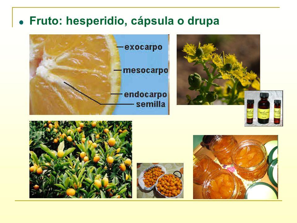 Fruto: hesperidio, cápsula o drupa
