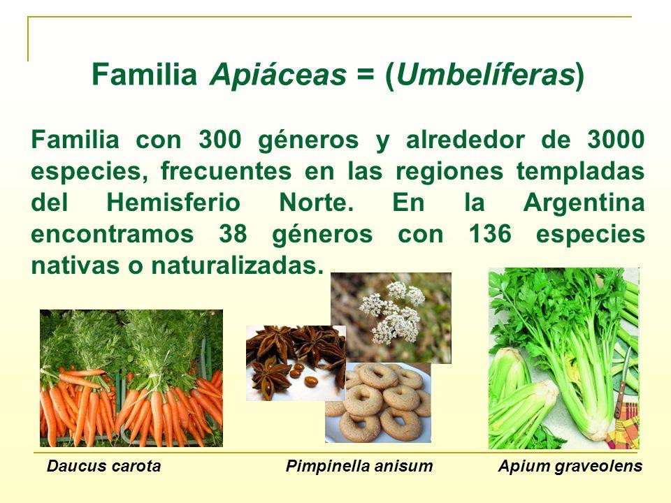 Familia Apiáceas = (Umbelíferas) Familia con 300 géneros y alrededor de 3000 especies, frecuentes en las regiones templadas del Hemisferio Norte. En l
