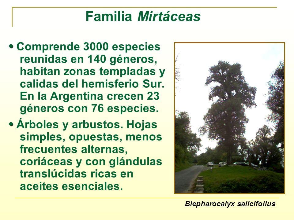 Familia Mirtáceas Comprende 3000 especies reunidas en 140 géneros, habitan zonas templadas y calidas del hemisferio Sur. En la Argentina crecen 23 gén