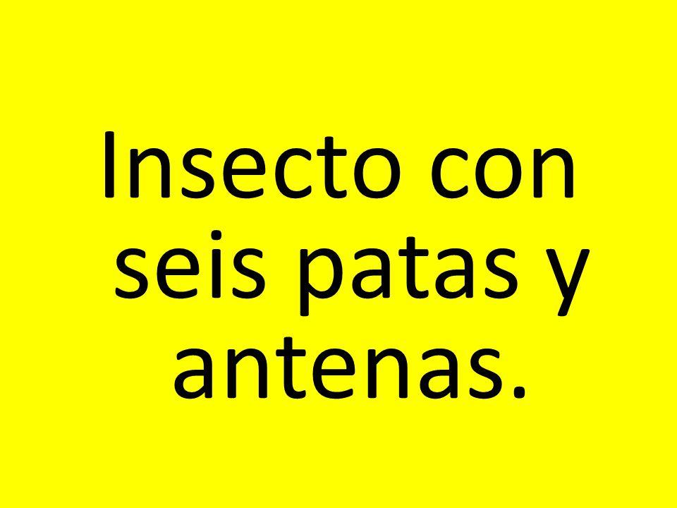 Insecto con seis patas y antenas.
