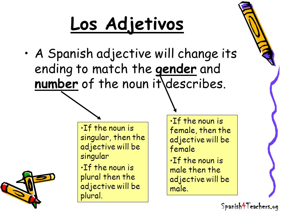 Male & Female All Spanish nouns (things) are either male or female.
