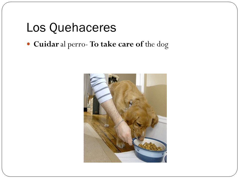 Los Quehaceres Cuidar al perro- To take care of the dog
