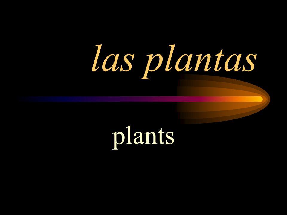 las plantas plants