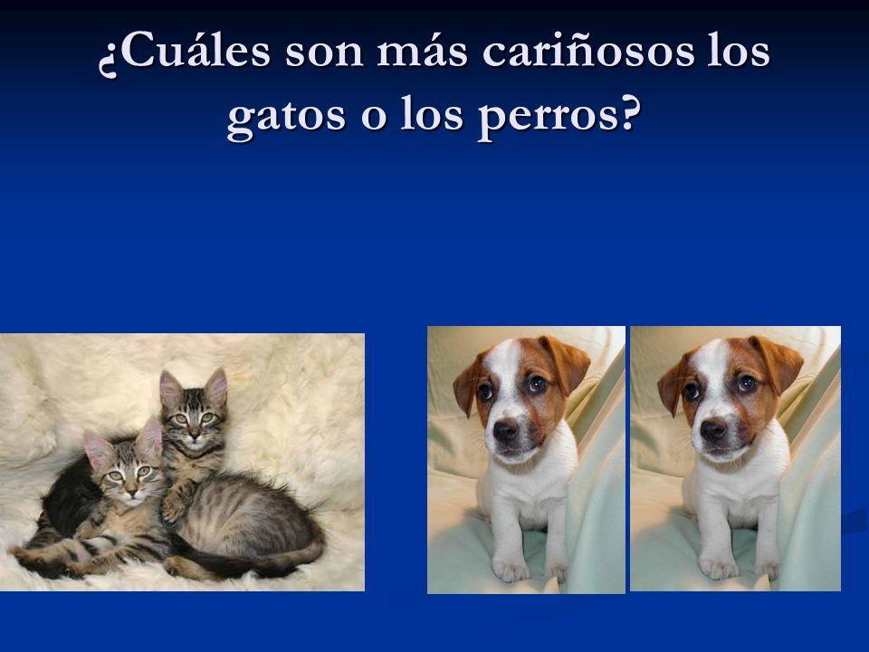 ¿Cuáles son más cariñosos los gatos o los perros?