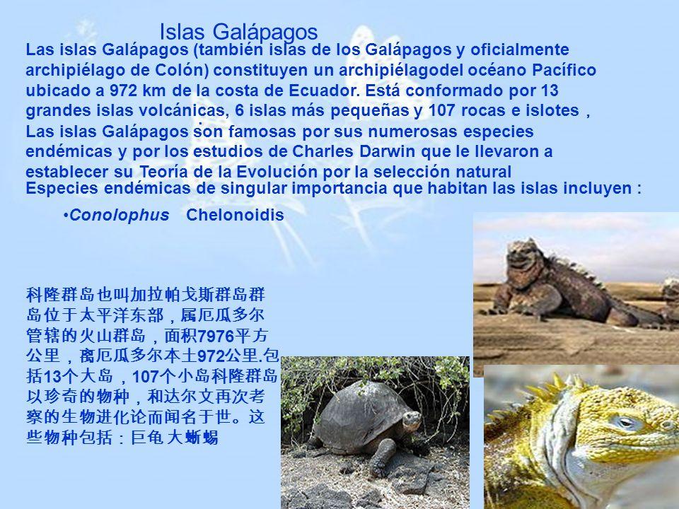 . Islas Galápagos Las islas Galápagos (también islas de los Galápagos y oficialmente archipiélago de Colón) constituyen un archipiélagodel océano Pací