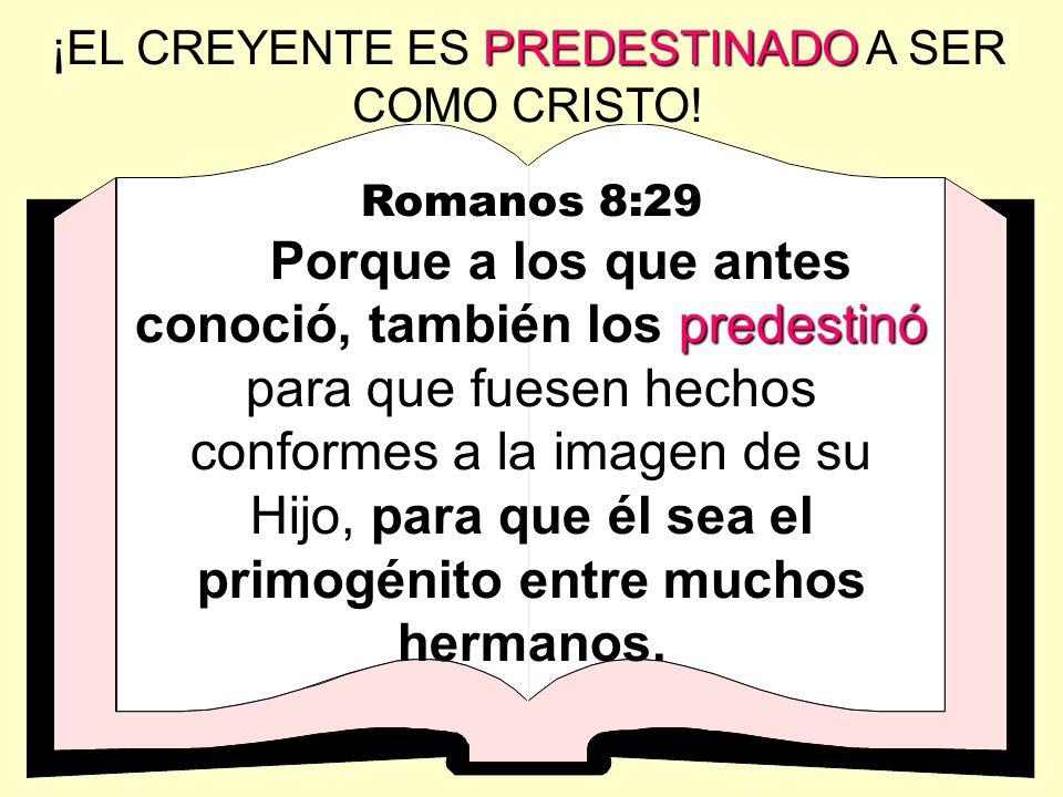 Romanos 8:29 predestinó Porque a los que antes conoció, también los predestinó para que fuesen hechos conformes a la imagen de su Hijo, para que él se