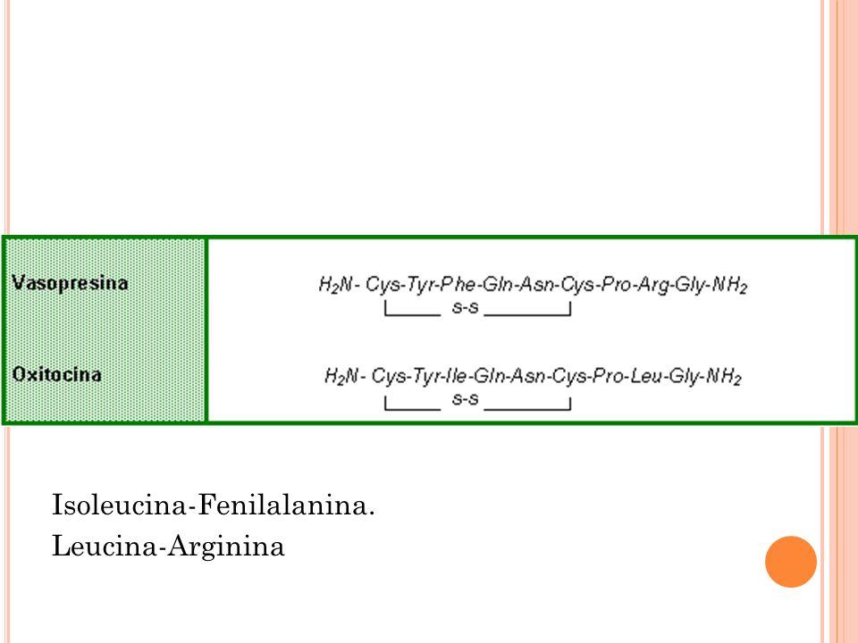 Isoleucina-Fenilalanina. Leucina-Arginina