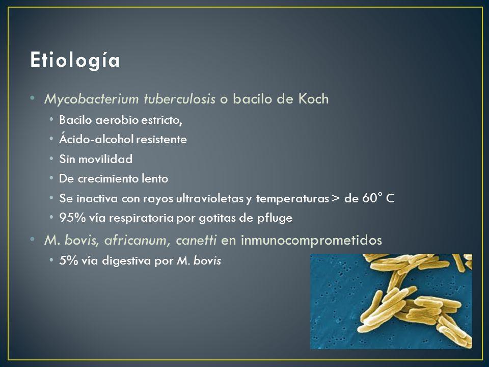 Mycobacterium tuberculosis o bacilo de Koch Bacilo aerobio estricto, Ácido-alcohol resistente Sin movilidad De crecimiento lento Se inactiva con rayos