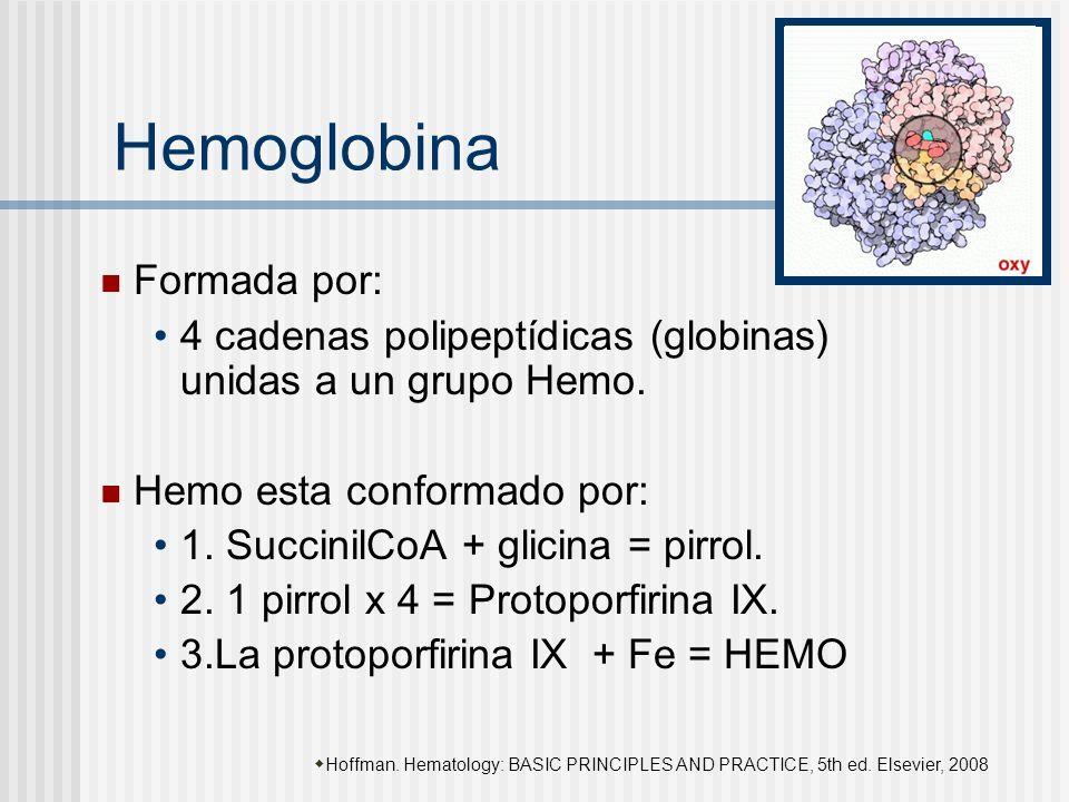 Hemoglobina Formada por: 4 cadenas polipeptídicas (globinas) unidas a un grupo Hemo. Hemo esta conformado por: 1. SuccinilCoA + glicina = pirrol. 2. 1