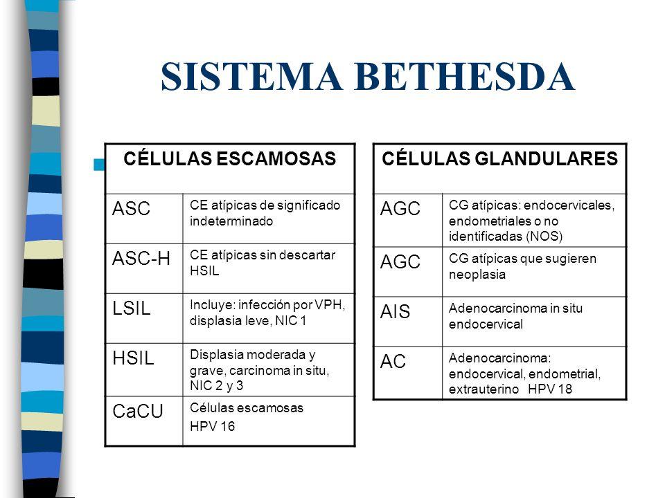 SISTEMA BETHESDA CÉLULAS ESCAMOSAS ASC CE atípicas de significado indeterminado ASC-H CE atípicas sin descartar HSIL LSIL Incluye: infección por VPH,