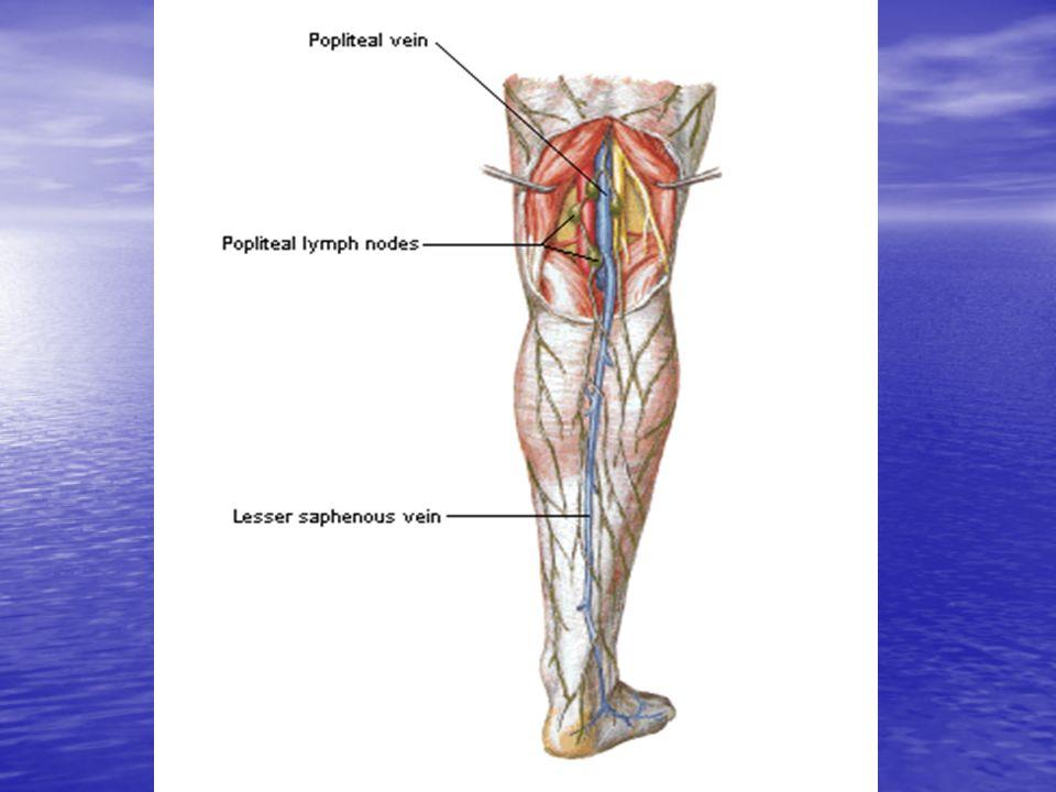 INSUFICIENCIA VENOSA Sistema venoso superficial: Safena interna: inicia frente al meleolo interno y corre medialmente a la ingle donde se une a la femoral.