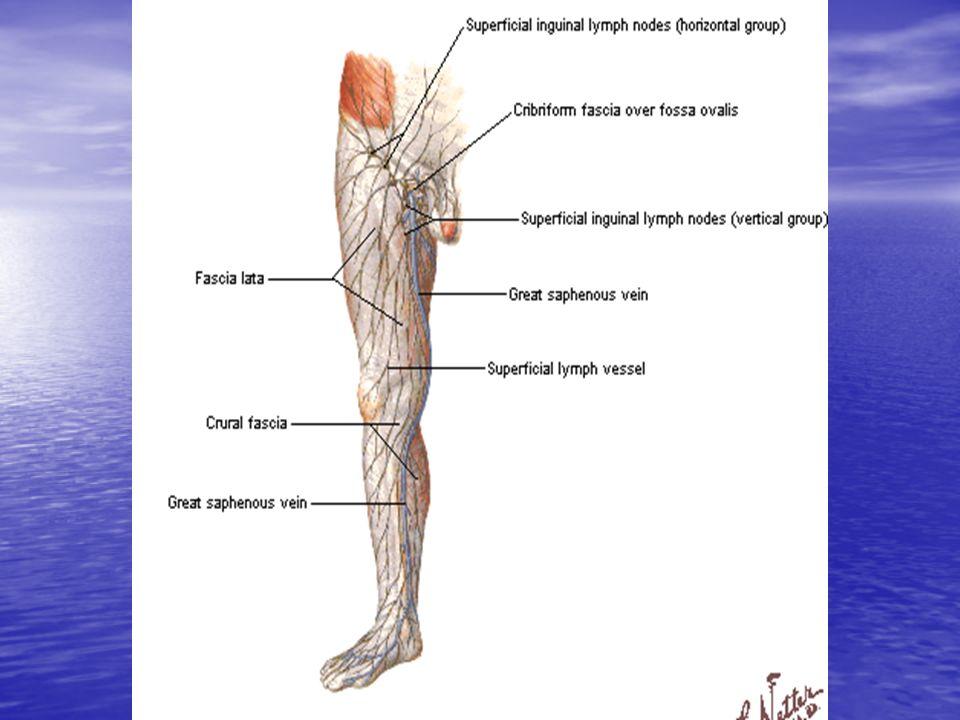 INSUFICIENCIA VENOSA Trombosis venosa superficial: Aparicion de un cordon venoso rojo, caliente, duro, que resulta doloroso al palpar.