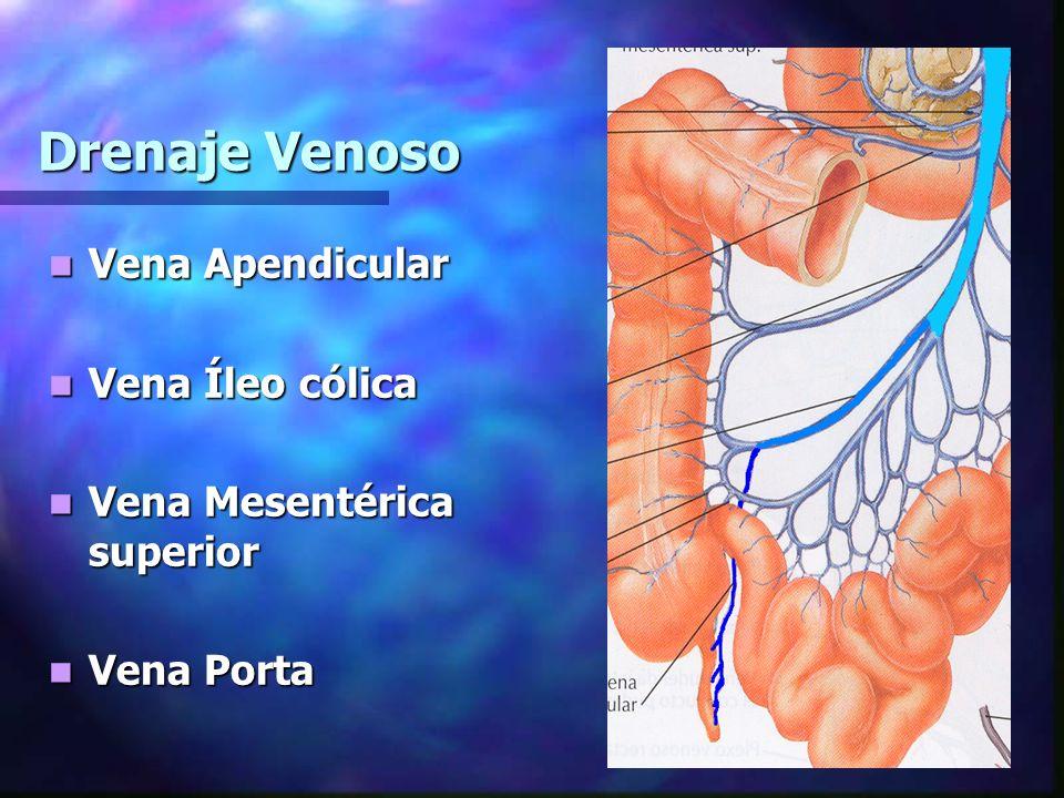 Drenaje Venoso Vena Apendicular Vena Apendicular Vena Íleo cólica Vena Íleo cólica Vena Mesentérica superior Vena Mesentérica superior Vena Porta Vena