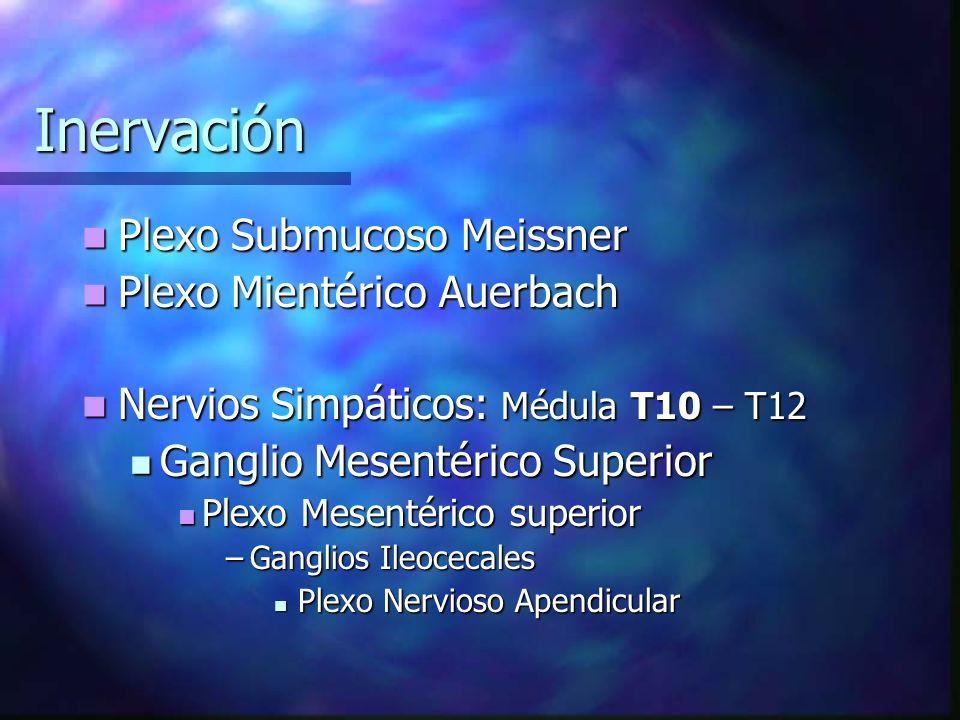 Inervación Plexo Submucoso Meissner Plexo Submucoso Meissner Plexo Mientérico Auerbach Plexo Mientérico Auerbach Nervios Simpáticos: Médula T10 – T12
