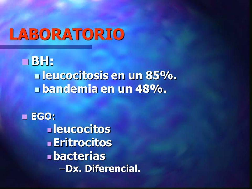 LABORATORIO BH: BH: leucocitosis en un 85%. leucocitosis en un 85%. bandemia en un 48%. bandemia en un 48%. EGO: EGO: leucocitos leucocitos Eritrocito