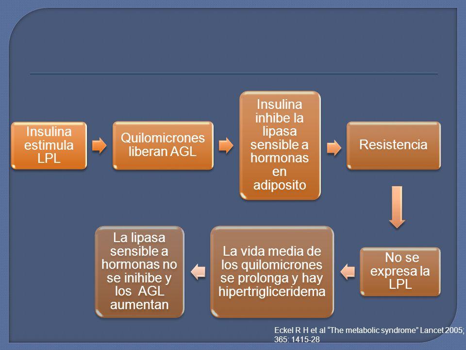 Insulina estimula LPL Quilomicrones liberan AGL Insulina inhibe la lipasa sensible a hormonas en adiposito Resistencia No se expresa la LPL La vida me