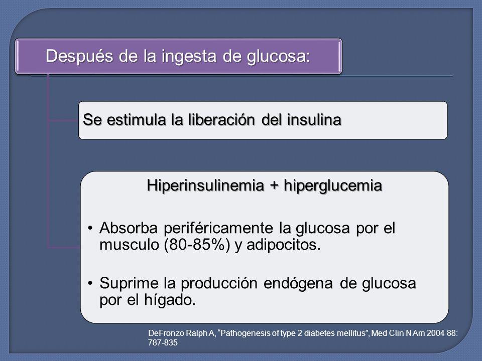 Después de la ingesta de glucosa: Se estimula la liberación del insulina Hiperinsulinemia + hiperglucemia Absorba periféricamente la glucosa por el mu