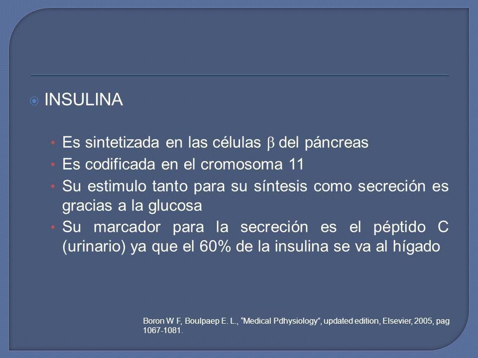 INSULINA Es sintetizada en las células β del páncreas Es codificada en el cromosoma 11 Su estimulo tanto para su síntesis como secreción es gracias a