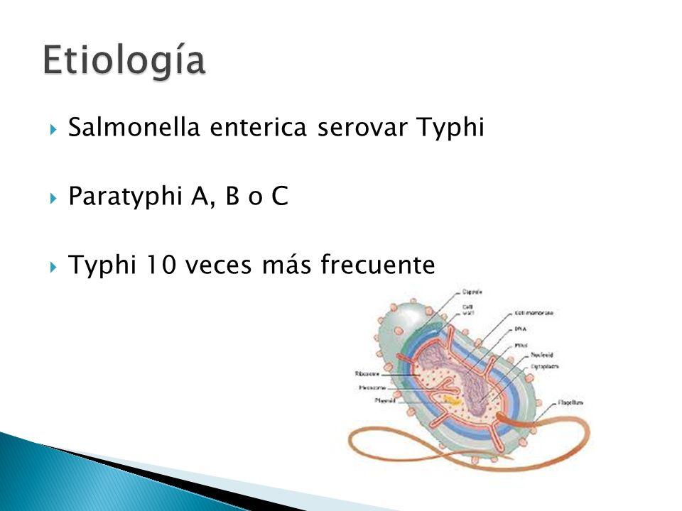 Salmonella enterica serovar Typhi Paratyphi A, B o C Typhi 10 veces más frecuente