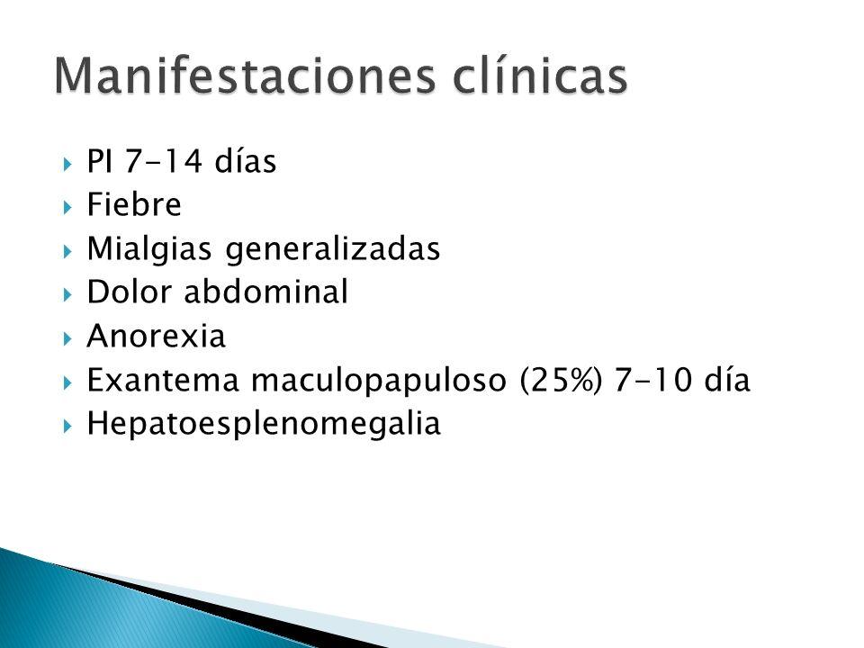 PI 7-14 días Fiebre Mialgias generalizadas Dolor abdominal Anorexia Exantema maculopapuloso (25%) 7-10 día Hepatoesplenomegalia