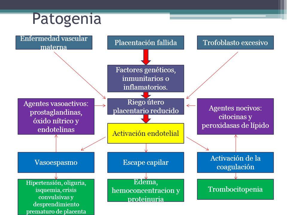 Patogenia Enfermedad vascular materna Placentación fallidaTrofoblasto excesivo Factores genéticos, inmunitarios o inflamatorios. Riego útero placentar