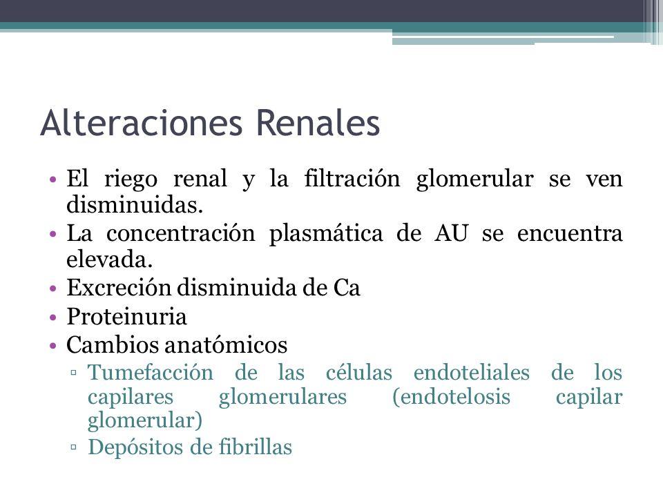 Alteraciones Renales El riego renal y la filtración glomerular se ven disminuidas. La concentración plasmática de AU se encuentra elevada. Excreción d