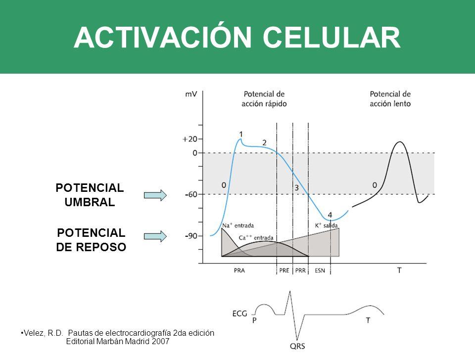 ACTIVACIÓN CELULAR POTENCIAL UMBRAL POTENCIAL DE REPOSO Velez, R.D.