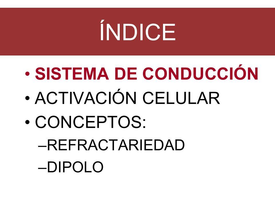 CONDUCCIÓN DEL POTENCIAL Nodo sinusal (0 sg): inicio aurícula por 3 haces de fibras internodales y de miocito en miocito.
