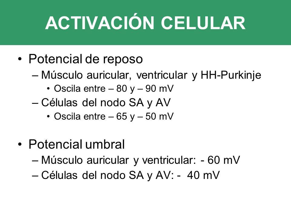 ACTIVACIÓN CELULAR Potencial de reposo –Músculo auricular, ventricular y HH-Purkinje Oscila entre – 80 y – 90 mV –Células del nodo SA y AV Oscila entre – 65 y – 50 mV Potencial umbral –Músculo auricular y ventricular: - 60 mV –Células del nodo SA y AV: - 40 mV