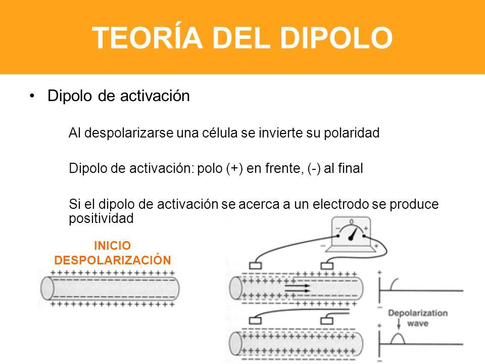 TEORÍA DEL DIPOLO Dipolo de activación Al despolarizarse una célula se invierte su polaridad Dipolo de activación: polo (+) en frente, (-) al final Si el dipolo de activación se acerca a un electrodo se produce positividad INICIO DESPOLARIZACIÓN