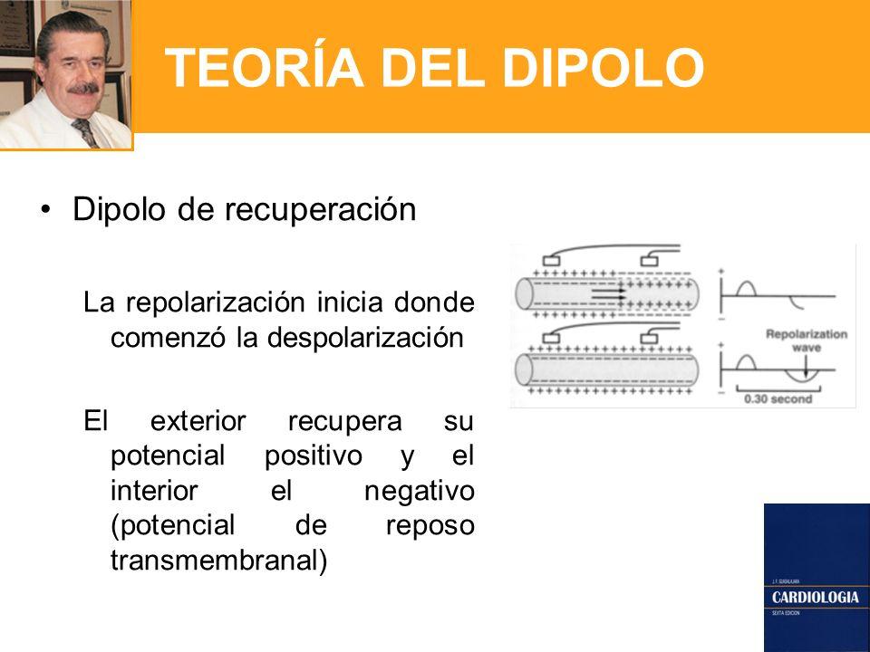 TEORÍA DEL DIPOLO Dipolo de recuperación La repolarización inicia donde comenzó la despolarización El exterior recupera su potencial positivo y el interior el negativo (potencial de reposo transmembranal)