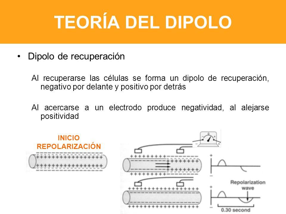TEORÍA DEL DIPOLO Dipolo de recuperación Al recuperarse las células se forma un dipolo de recuperación, negativo por delante y positivo por detrás Al acercarse a un electrodo produce negatividad, al alejarse positividad INICIO REPOLARIZACIÓN