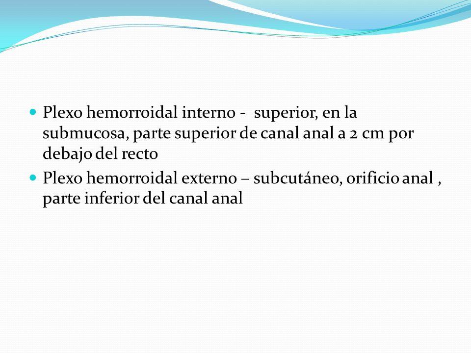 Plexo hemorroidal interno - superior, en la submucosa, parte superior de canal anal a 2 cm por debajo del recto Plexo hemorroidal externo – subcutáneo