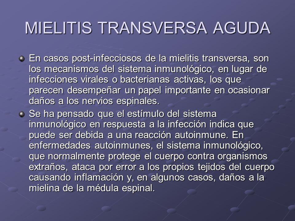 MIELITIS TRANSVERSA AGUDA En casos post-infecciosos de la mielitis transversa, son los mecanismos del sistema inmunológico, en lugar de infecciones vi