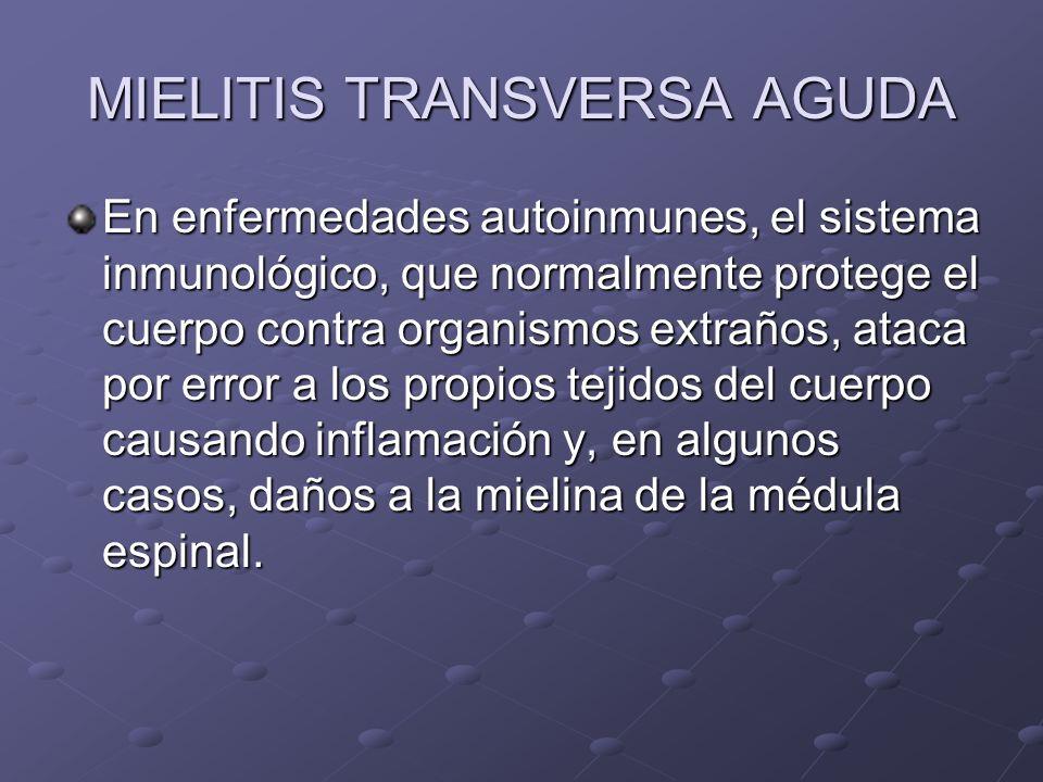 MIELITIS TRANSVERSA AGUDA En enfermedades autoinmunes, el sistema inmunológico, que normalmente protege el cuerpo contra organismos extraños, ataca po