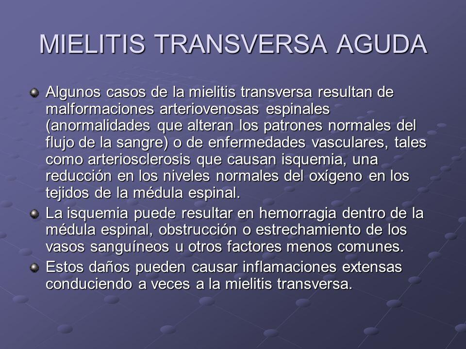 MIELITIS TRANSVERSA AGUDA Algunos casos de la mielitis transversa resultan de malformaciones arteriovenosas espinales (anormalidades que alteran los p