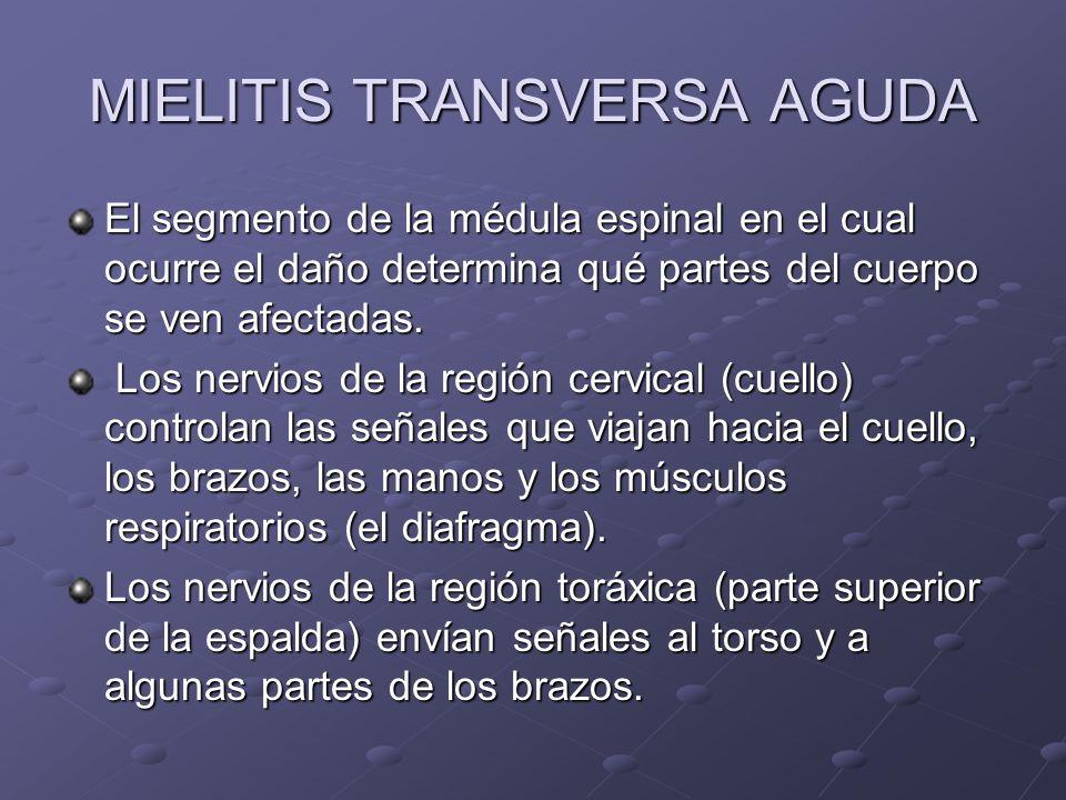 MIELITIS TRANSVERSA AGUDA El segmento de la médula espinal en el cual ocurre el daño determina qué partes del cuerpo se ven afectadas. Los nervios de