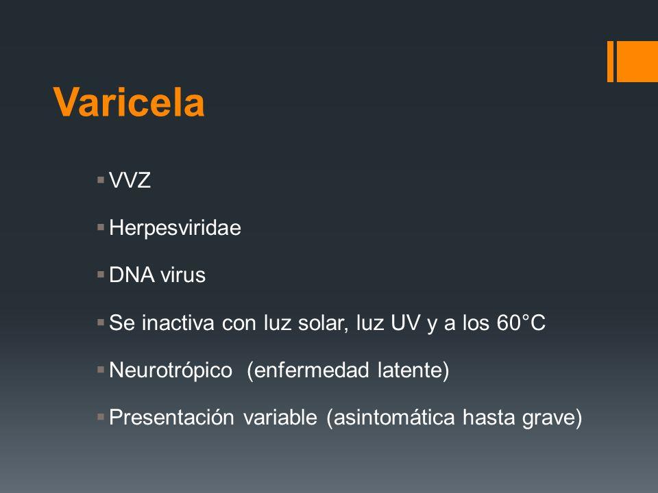 VVZ Herpesviridae DNA virus Se inactiva con luz solar, luz UV y a los 60°C Neurotrópico (enfermedad latente) Presentación variable (asintomática hasta