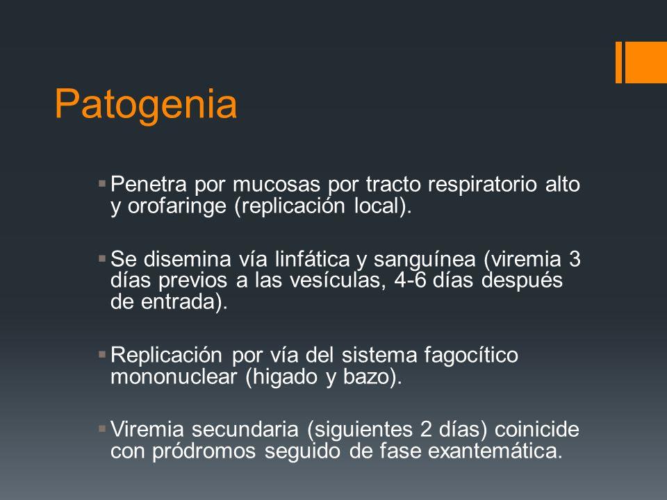 Patogenia Penetra por mucosas por tracto respiratorio alto y orofaringe (replicación local). Se disemina vía linfática y sanguínea (viremia 3 días pre